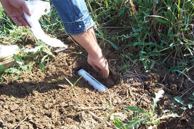 3. Πιέστε το χώμα εκατέρωθεν της παγίδας ώστε ο τυφλοπόντικας να περάσει από μέσα