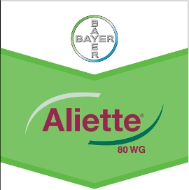 Aliette_80_WG_4d3202885a936