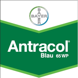 Antracol_65_WP_4d320b31e5dba