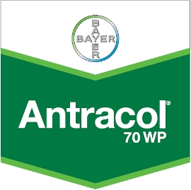Antracol_70_WP_4d321332b535e