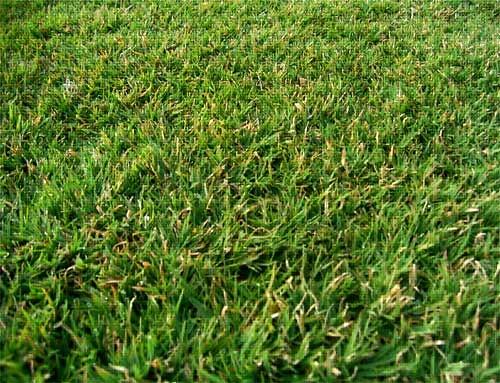 BERMUDA_GRASS_4ed7b9cb92847