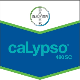 Calypso_480_SC_4d30dde89612d