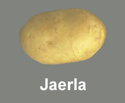 JAERLA_4ec69ac492949