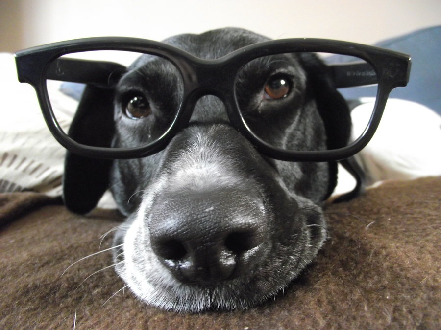 dog_with_glasses