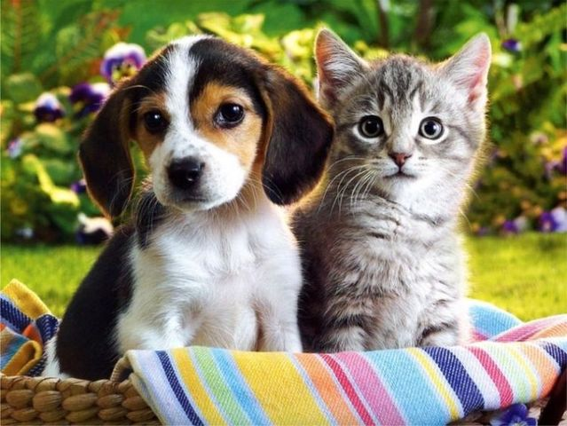 cats_dogs_03